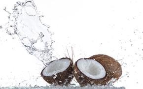 Picture water, squirt, tropics, coconut, splash