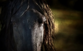 Picture macro, background, horse