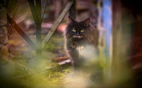Picture cat, cat, look, the fence, blur, spring, garden, yard, black, face, sitting, spotted, motley