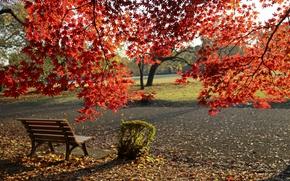 Picture Autumn, Bench, Park, Fall, Foliage, Park, Autumn, Colors, Leaves