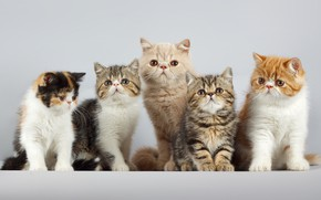 Picture Cats, Background, Cats