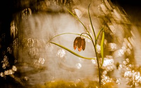 Picture flower, light, nature