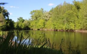 Picture greens, the sky, water, macro, river, green, widescreen, wallpaper, blur, nature, green background, macro, fon, ...