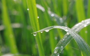 Picture grass, drops, background, race