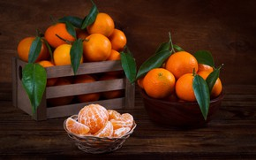 Wallpaper leaves, Mandarin, citrus, slices
