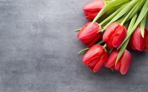 Picture flowers, bouquet, tulips, red, red, fresh, flowers, beautiful, tulips, spring