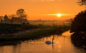 Wallpaper the sky, grass, the sun, trees, landscape, sunset, birds, nature, fog, river, shore, village, duck, ...