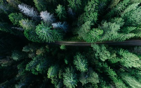 Picture road, forest, Sweden, Sweden, the view from the top, Gavle