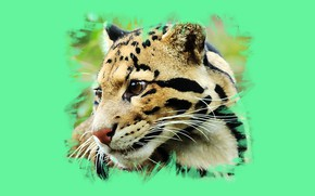 Picture wool, color, Clouded leopard
