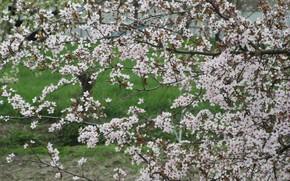 Picture tree, spring, spring 2018, Meduzanol ©