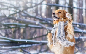 Picture winter, snow, mood, dog, scarf, stand