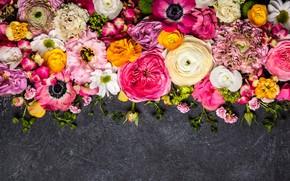Wallpaper flowers, flowers, composition