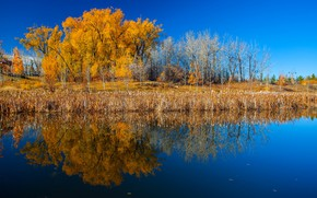 Picture autumn, trees, reflection, river, Canada, Albert