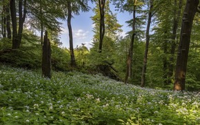 Picture forest, spring, Germany