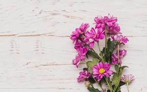 Picture flowers, background, bouquet, chrysanthemum