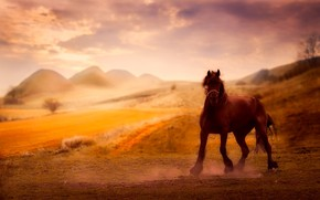 Picture nature, background, horse, horse