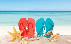 Picture sand, sea, beach, summer, the sun, shell, summer, beach, vacation, sand, slates, vacation, starfish, seashells