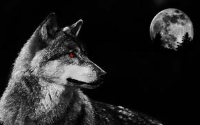 Wallpaper eyes, predator, wolf, the moon