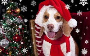 Picture heat, hat, tree, dog, New year, Christmas, winter, dogs, Beagle, Holidays
