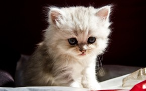 Picture kitty, baby, muzzle, baby