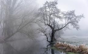 Wallpaper nature, river, fog