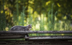Picture bokeh, on the fence, tabby cat