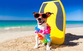 Picture beach, dog, humor, garland, Jack Russell Terrier
