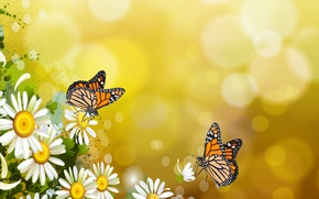 Picture butterfly, mood, butterfly, chamomile, the Wallpapers