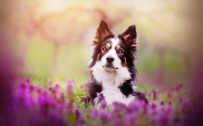 Picture flowers, dog, spring, Spring mood