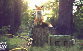Picture Fox, Apocalypse, Survival, Fox, Weapons, Mask, Forest, Zombies, Forest, Box, Gun, Last Day on Earth, …