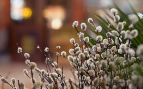 Picture background, spring, picture, Verba, willow twigs