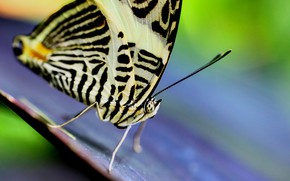 Picture macro, background, butterfly