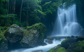Picture forest, branches, fog, stones, waterfall, moss, stream, cascade, boulders