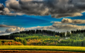 Picture field, forest, summer