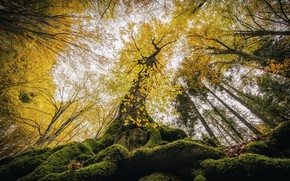 Picture autumn, forest, trees, nature, foliage, up