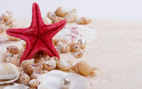 Picture sand, shell, wood, sand, marine, still life, pearl, starfish, seashells, perl