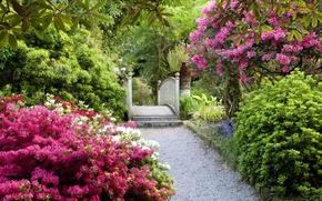 Picture garden, ladder, track, UK, Magnolia, flowering trees, United Kingdom, gardens
