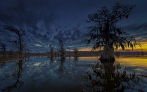 Picture trees, night, nature, river