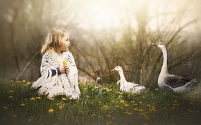 Picture nature, girl, geese