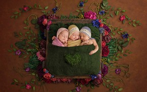 Picture flowers, children, mood, sleep, trio, Trinity, sleeping, babies