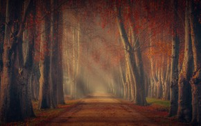 Picture road, autumn, forest, trees, foliage