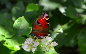 Picture Macro, Flowers, Butterfly, Flowers, Macro, Butterfy