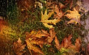 Picture drops, rain, autumn leaves, Kide Fotoart