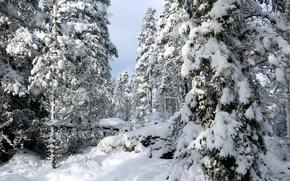 Picture Finland, Finland, Uusimaa, Nuuksio national park, Tockskog