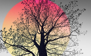 Picture nature, background, tree