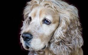 Picture each, dog, muzzle