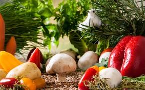 Picture Garden, Mushrooms, Vegetables, Tomatoes, Landscape, Paprika