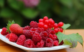 Picture autumn, berries, raspberry, beauty, harvest, strawberry, vitamins, delicious, cottage, Kalina