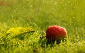Picture summer, grass, Apple