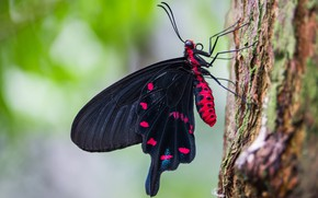 Picture macro, butterfly, insects, nature, green, background, tree, pattern, butterfly, black, insect, bark, red, blurred, proboscis